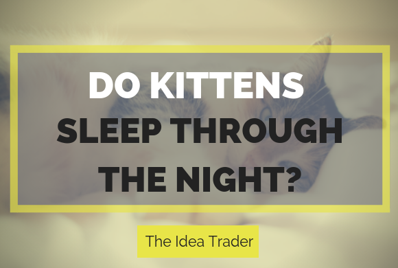 Do Kittens Sleep Through the Night? – The Idea Trader