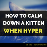 how to calm down a kitten when hyper